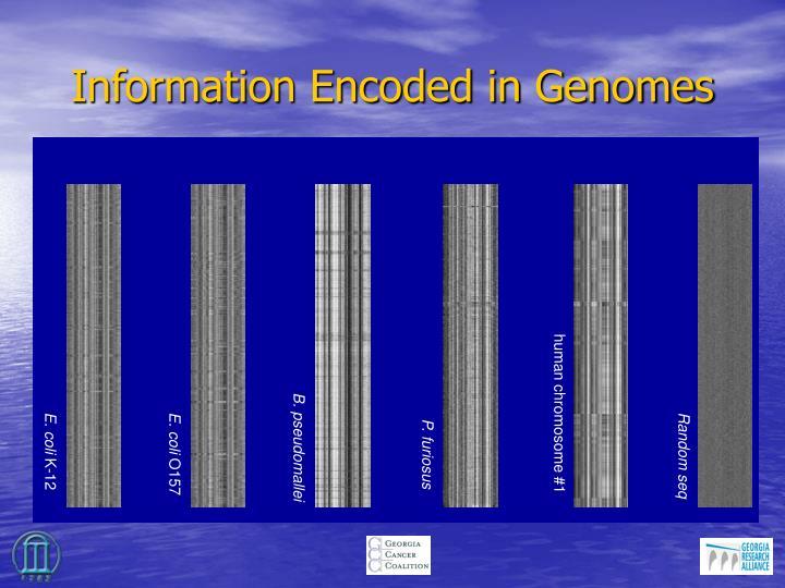 human chromosome #1
