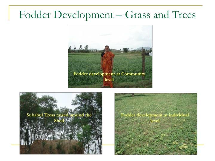 Fodder Development – Grass and Trees