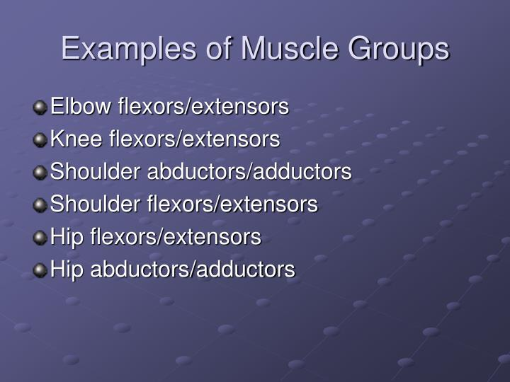 Examples of Muscle Groups
