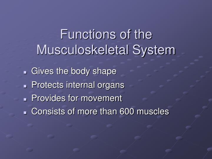 Functions of the musculoskeletal system