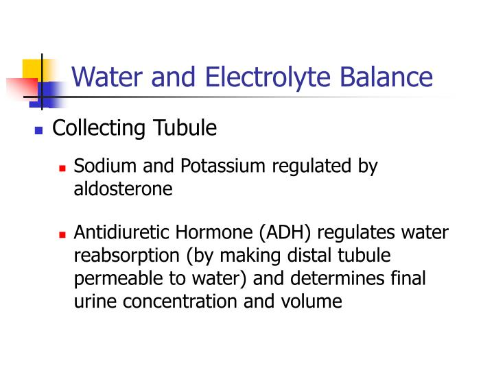Water and Electrolyte Balance