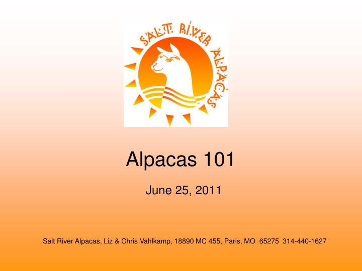 alpacas 101 n.