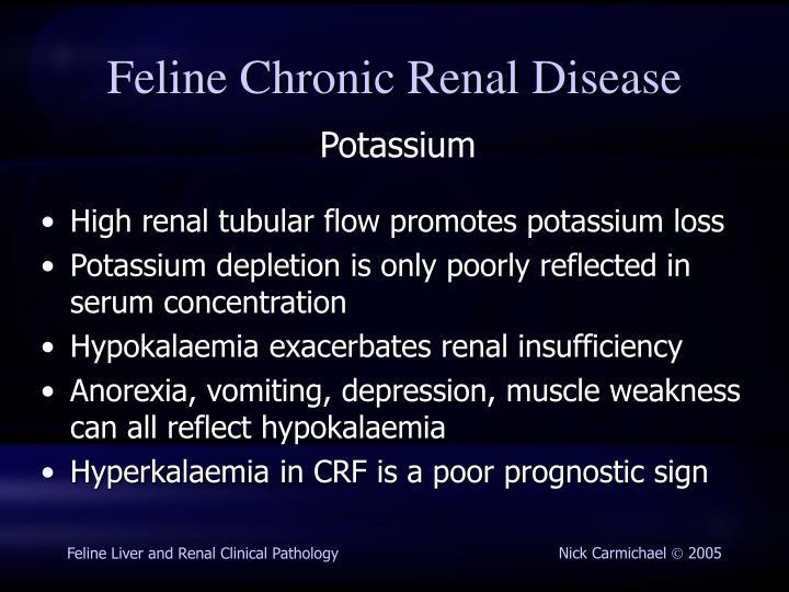High renal tubular flow promotes potassium loss