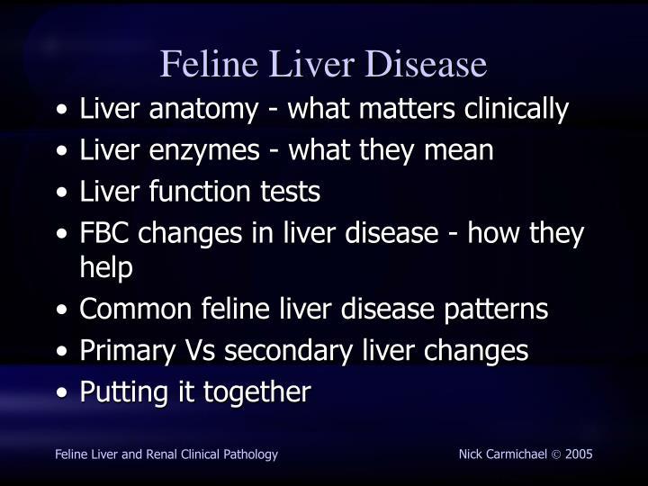 Feline liver disease