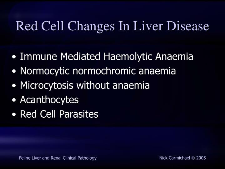 Red Cell Changes In Liver Disease