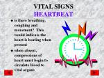 vital signs heartbeat