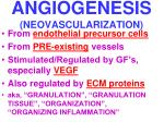 angiogenesis neovascularization