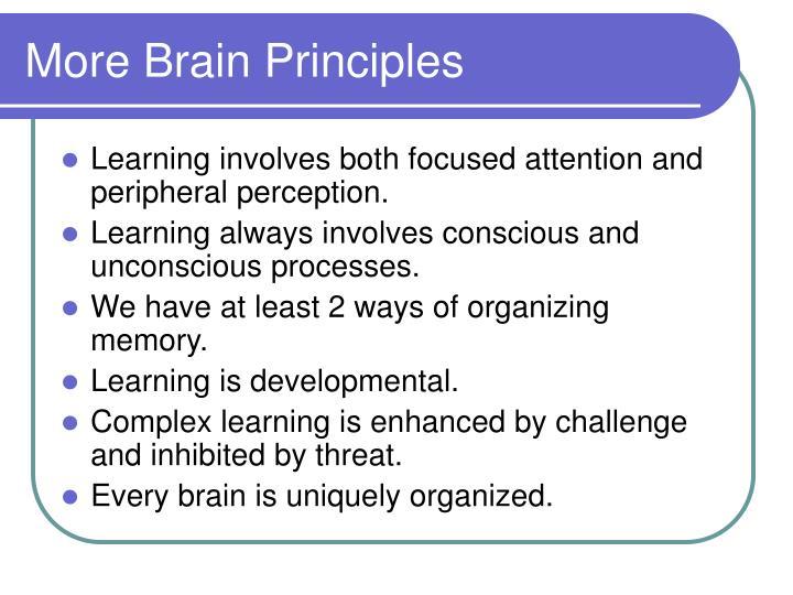 More Brain Principles
