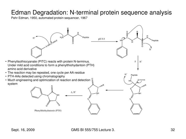 Edman Degradation: N-terminal protein sequence analysis