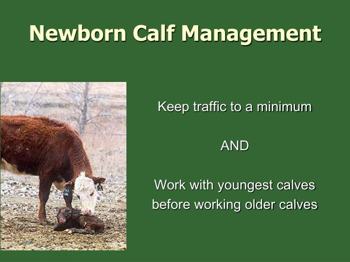 Newborn Calf Management
