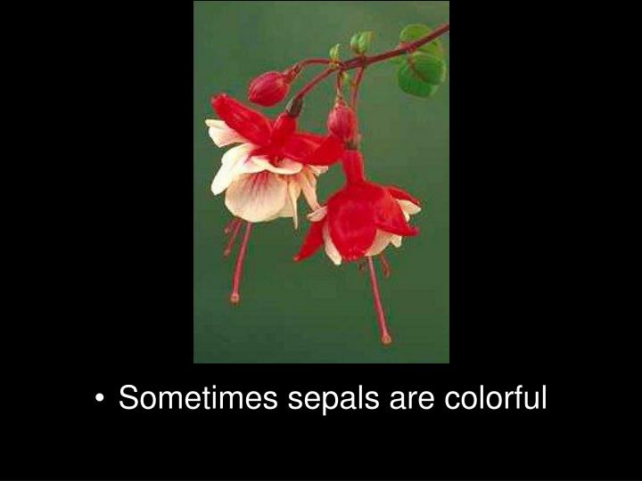 Sometimes sepals are colorful