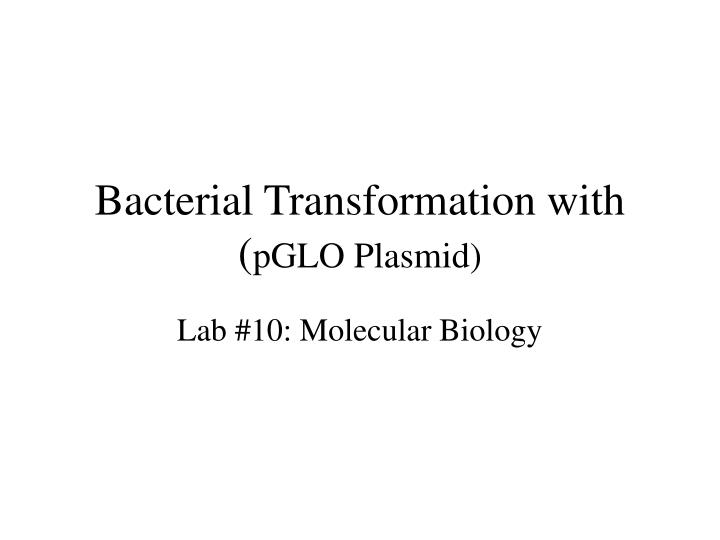 bacterial transformation with pglo plasmid n.
