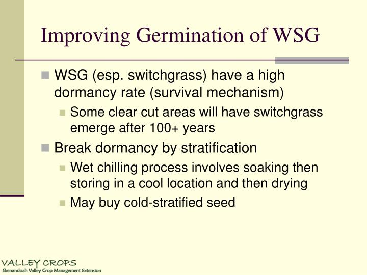 Improving Germination of WSG