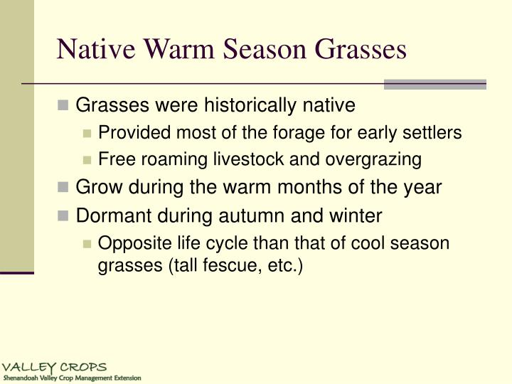 Native warm season grasses