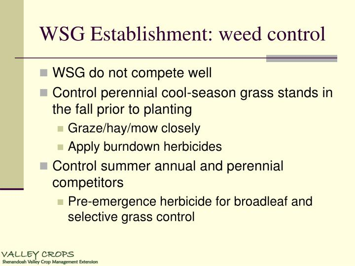 WSG Establishment: weed control