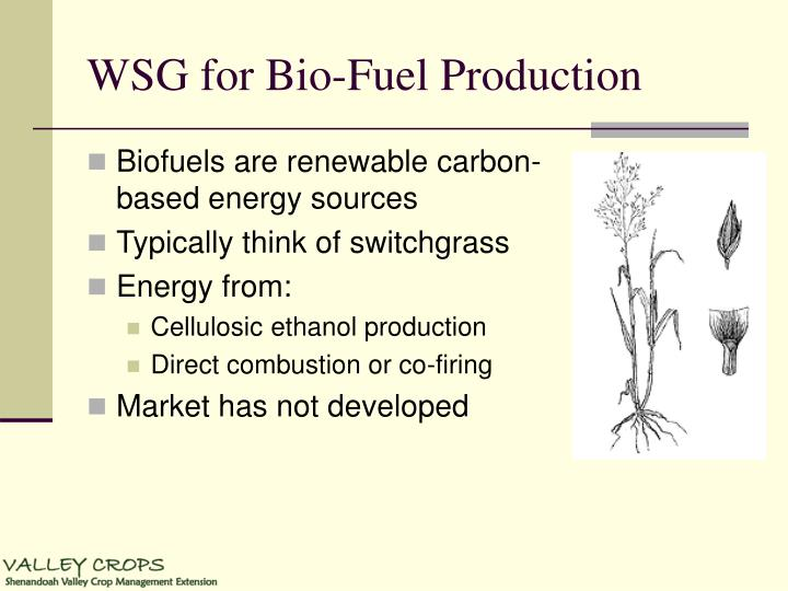 WSG for Bio-Fuel Production