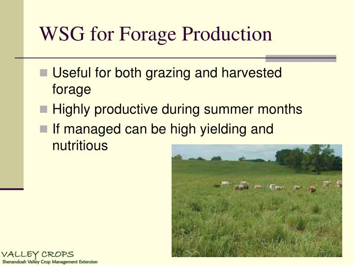 WSG for Forage Production