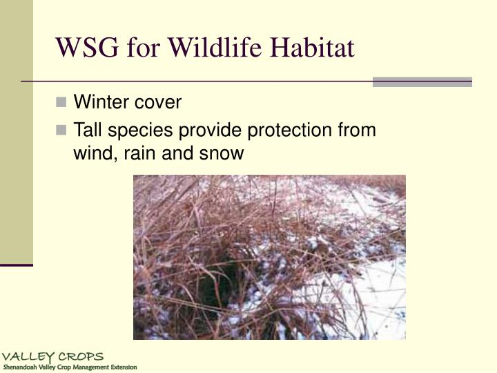 WSG for Wildlife Habitat