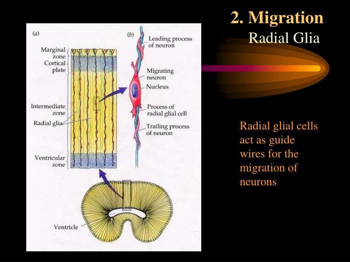 2. Migration