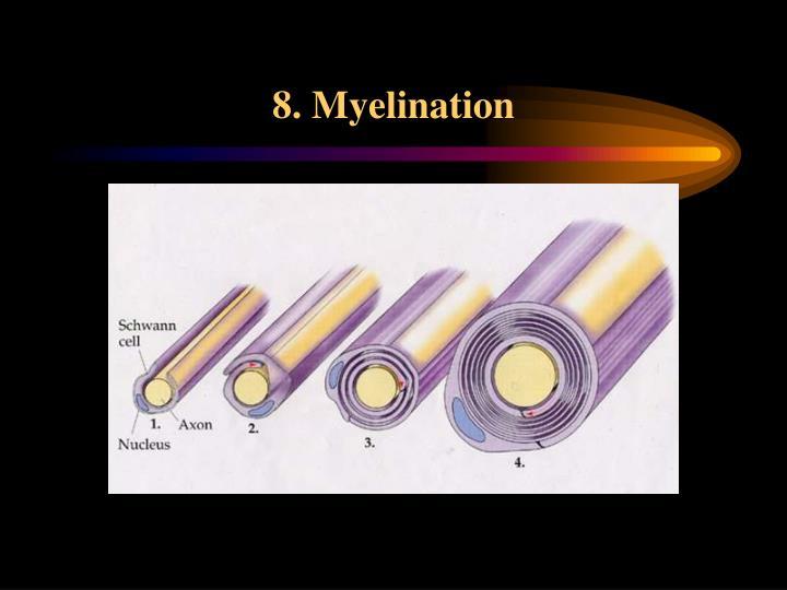 8. Myelination