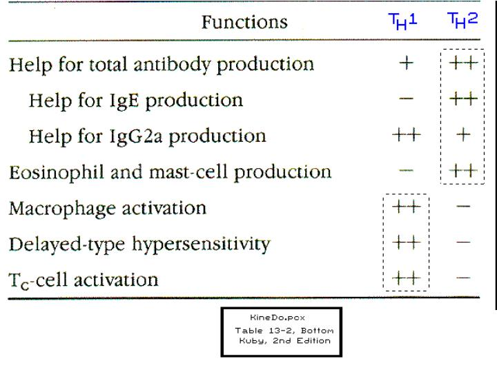 Functions of TH1 and TH2