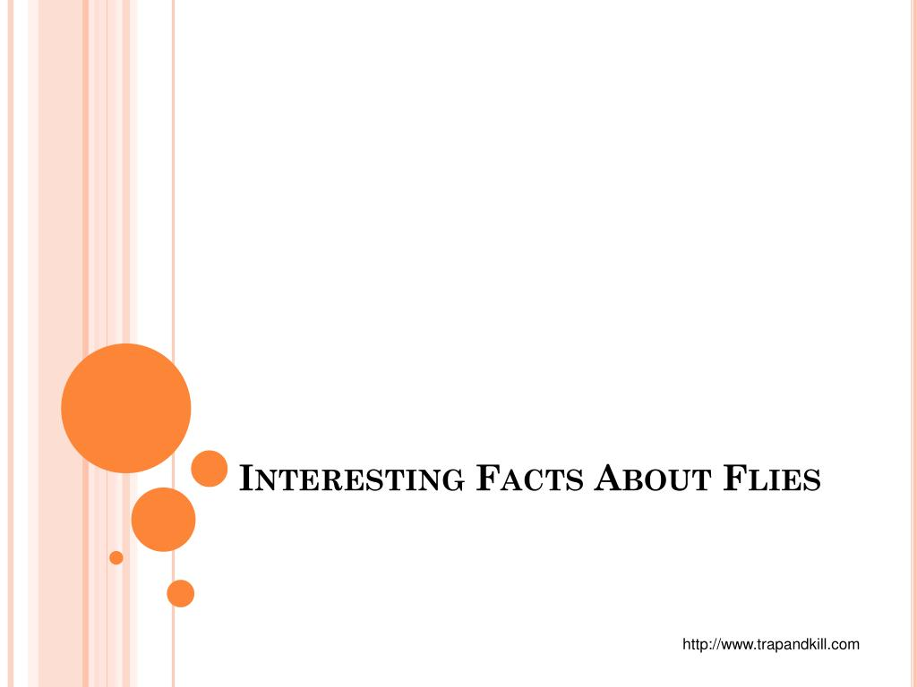 interesting facts about flies l.