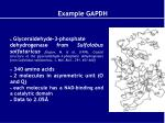 example gapdh