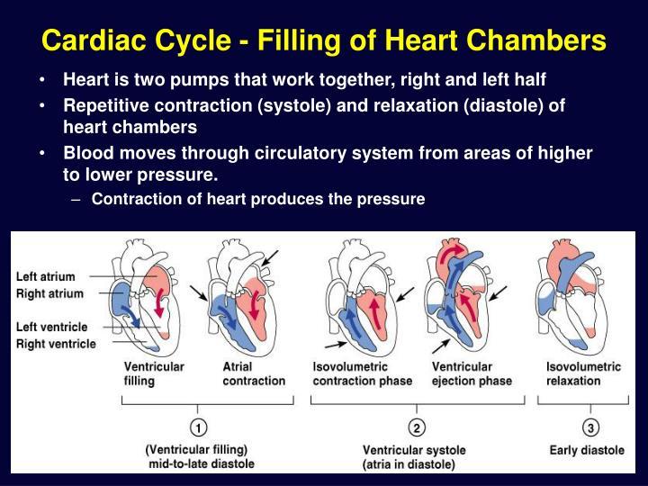 Cardiac Cycle - Filling of Heart Chambers