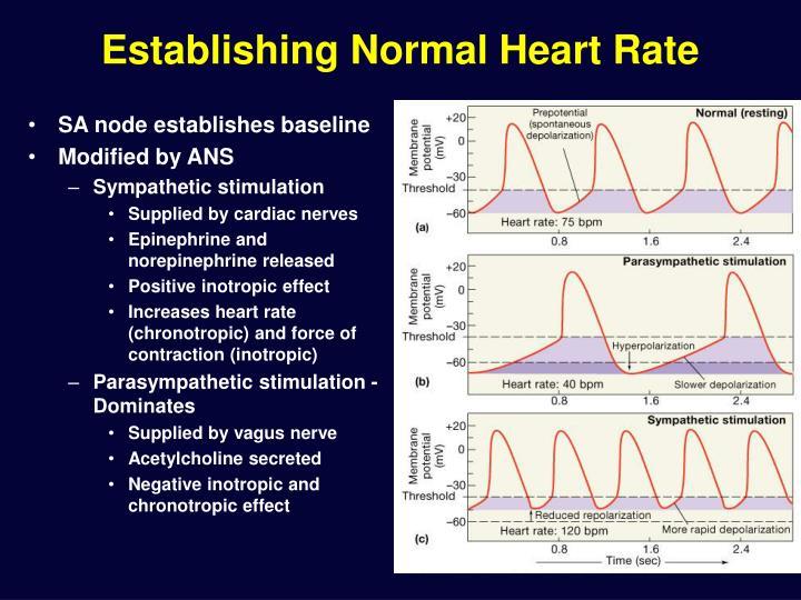 Establishing Normal Heart Rate