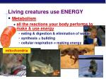 living creatures use energy