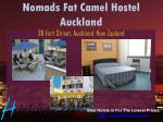 nomads fat camel hostel auckland 38 fort street auckland new zealand