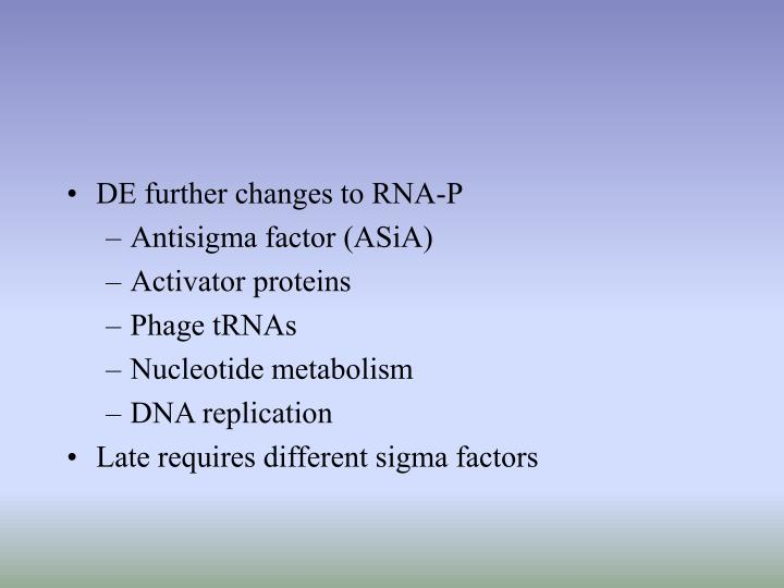 DE further changes to RNA-P