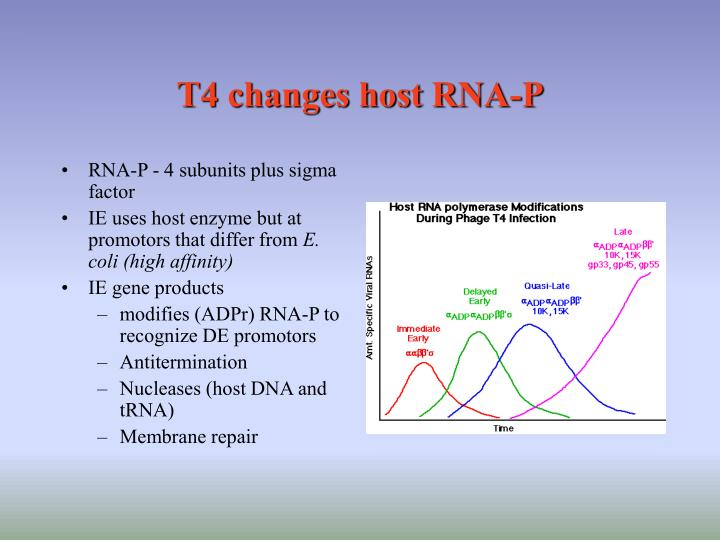 T4 changes host RNA-P