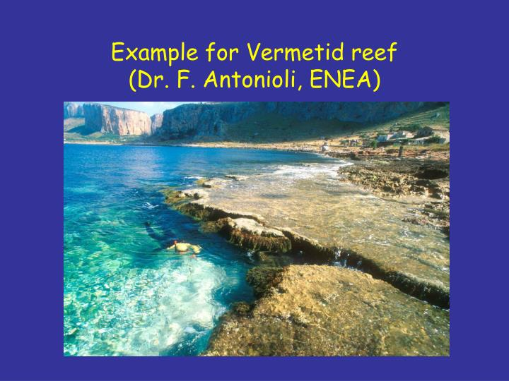 Example for Vermetid reef