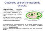 org nulos de transformaci n de energ a1