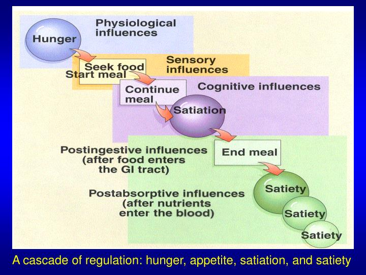 A cascade of regulation: hunger, appetite, satiation, and satiety