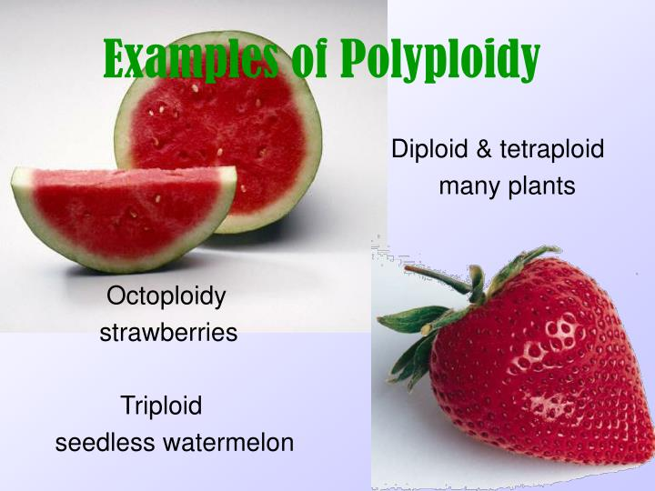 Examples of Polyploidy