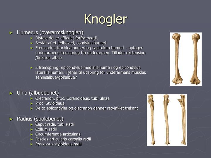 Knogler1