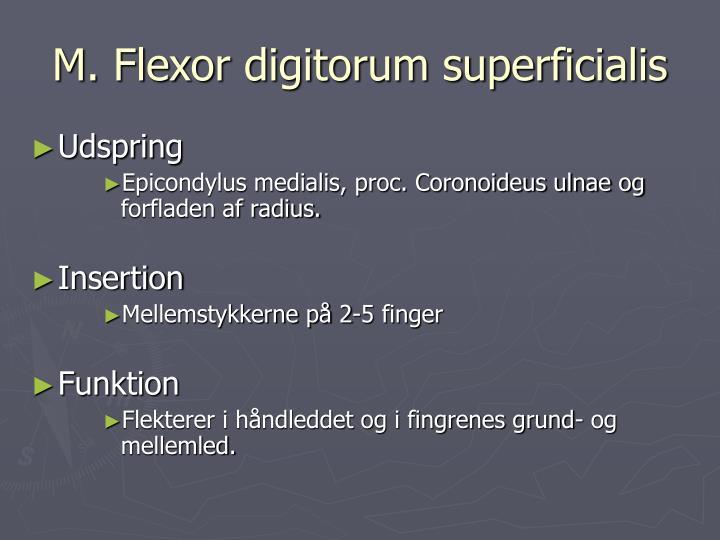M. Flexor digitorum superficialis