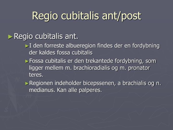 Regio cubitalis ant/post