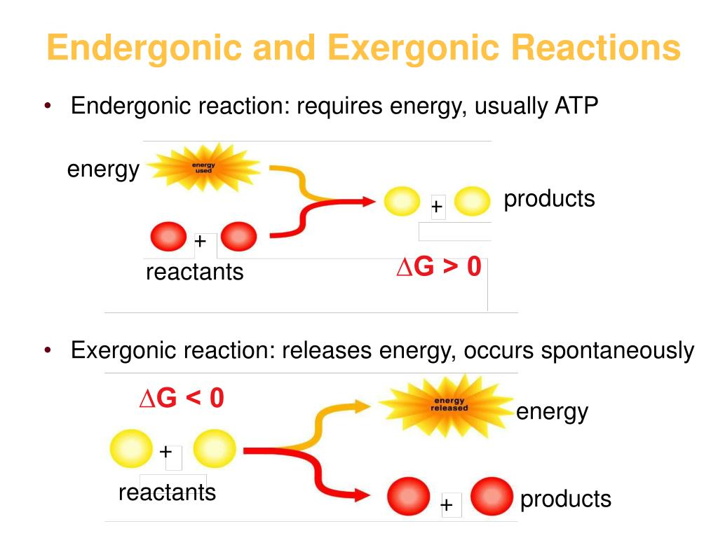 Photosynthesis exergonic is endergonic or