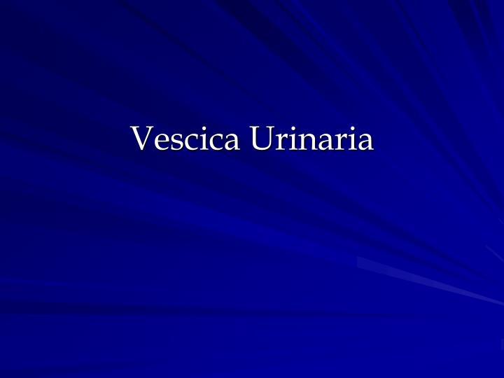 Vescica Urinaria