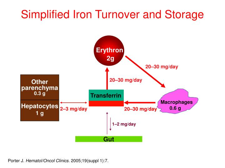 Simplified Iron Turnover and Storage