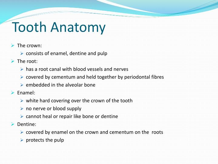 Ppt The Anatomy Physiology And Morphology Of Teeth Powerpoint