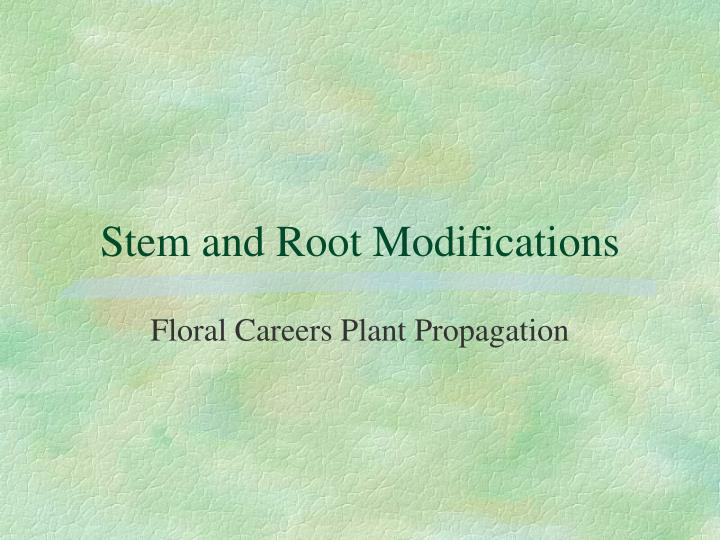 stem and root modifications n.