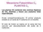 mecanismo fotosint tico c 4 plantas c 4