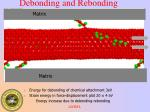 debonding and rebonding