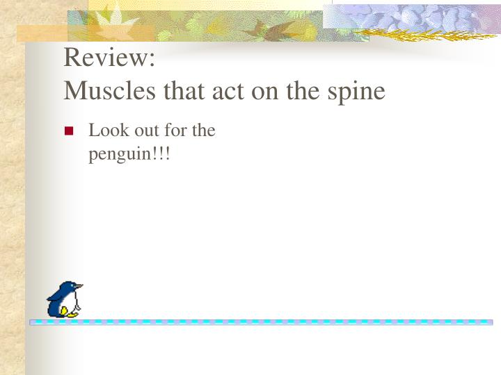 review muscles that act on the spine n.