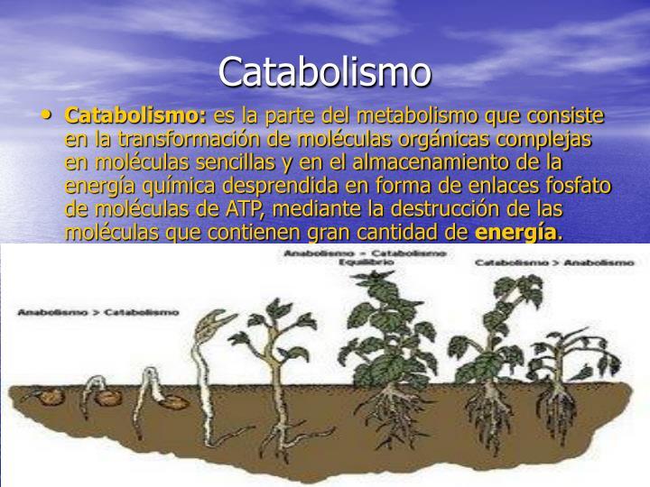Catabolismo