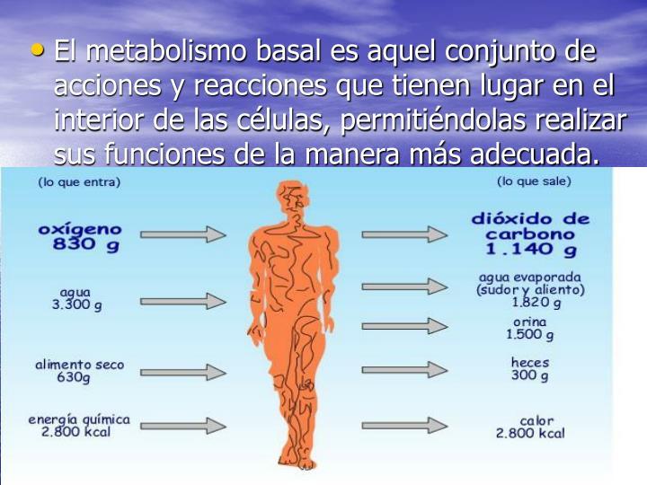 El metabolismo basal es aquel conjunto de acciones y reacciones que tienen lugar en el interior de l...